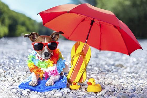Mantenha seu cão sempre perto de uma área sombreada Foto thinkstockphotos
