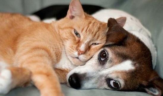 Caes e gatos - Cópia